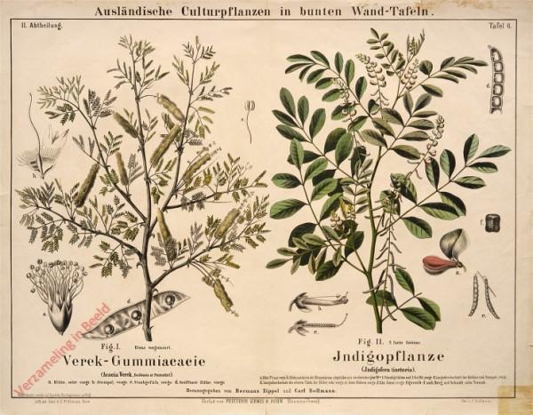 II. Abteilung, 6 - Verek-Gummiacacie, Indigopflanze
