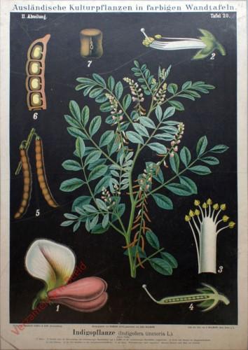 II. Abteilung, 20 - Indigopflanze