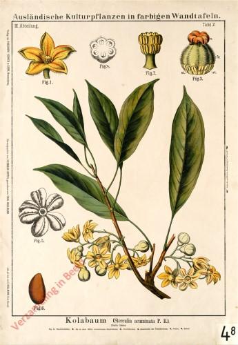 III. Abteilung, 7 - Kola- oder Gurunussbaum