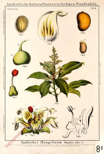 III. Abteilung, 11 - Indischer Mangobaum