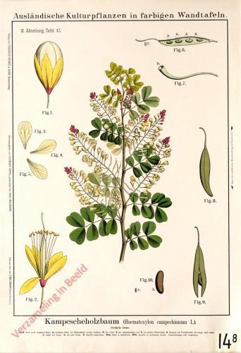 III. Abteilung, 17 - Kampescheholzbaum
