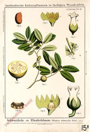 III. Abteilung, 18 - Schwarzholz- oder Ebenholzbaum