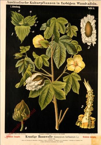 I. Abteilung, 3 - Krautartige Baumwolle