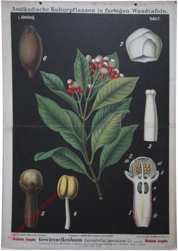 I. Abteilung, 7 - Gewürznelkenbaum