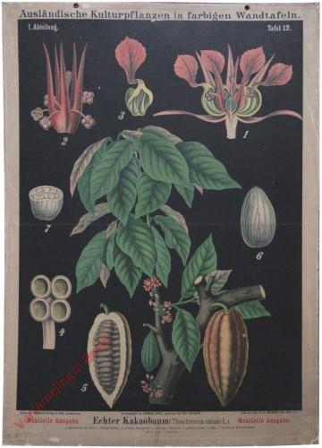 I. Abteilung, 12 - Echter Kakaobaum