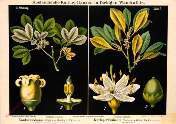 II. Abteilung, 7 - Kautschukbaumstica. Guttaperchabaum