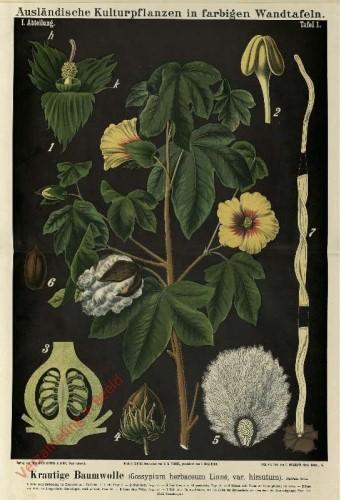 I. Abteilung, 1 - Krautige Baumwolle (Gossypium herbaceum Linne)
