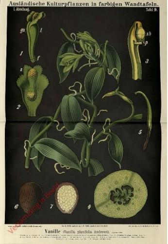 I. Abteilung, 9 - Vanille (Vanilla planifolia Andrews)
