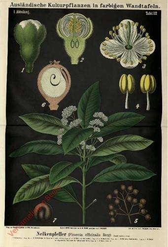 I. Abteilung, 12 - Nelkenpfeffer (Pimenta officinalis Berg)