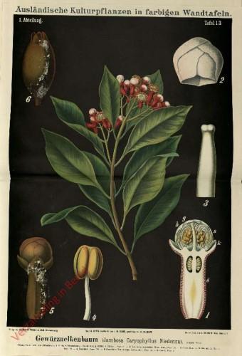 I. Abteilung, 13 - Gewurznelkenbaum (Jambosa Caryophyllus Nidenzu)