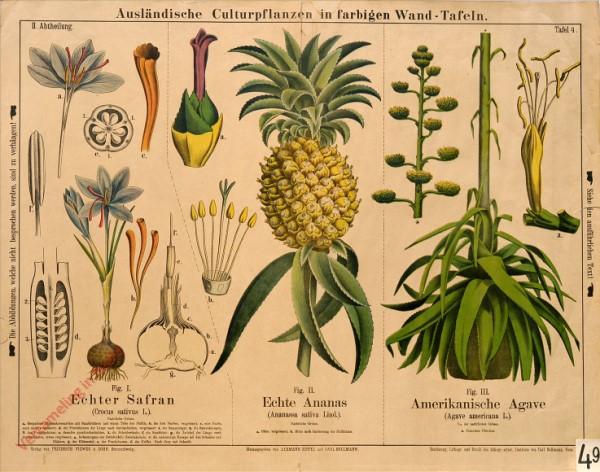 II. Abteilung, 4 - Echter Safran, Echte Ananas, Amerikanische Agave