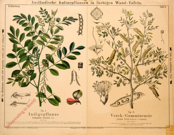 II. Abteilung, 11 - Indigopflanze, Verek-Gummiacacie