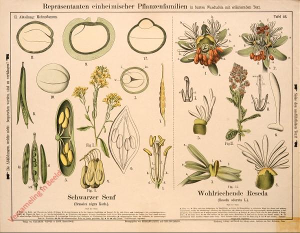 II. Abteilung, 46 - Mohnpflanzen