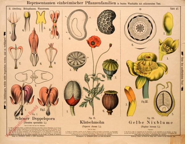 II. Abteilung, 47 - Mohnpflanzen, Wasserosen