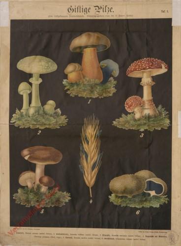 1 - Giftige Pilze