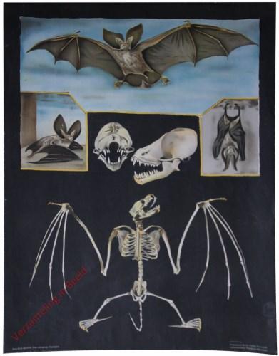 3 [var 1] - Fledermaus [vleermuis vliegt naar links, 3x in 3 plaatjes]
