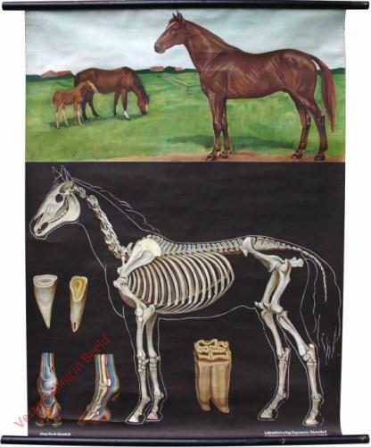 10 [var 2A] - Pferd [Boven met veulen]