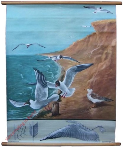 12 [var 2] - Lachm�ve-Vogelflug