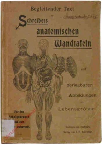 DU - Schreibers anatomischen Wandtafeln, mit zerlegbare Abbildungen in Lebensgrösse