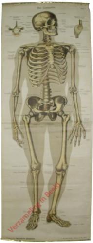 I - Das Knochengerüst