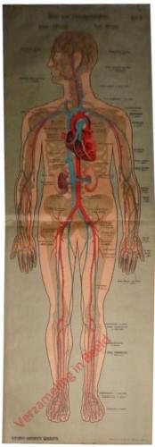 IV - Blut und Lymphgefäss-System