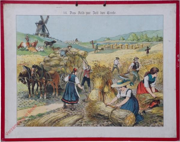 14 - Das Feld zur Zeit der Ernte