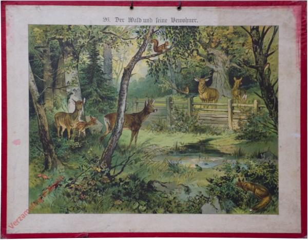 26 - Der Wald und seiner Bewohner