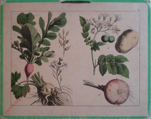XI - [Diverse planten]