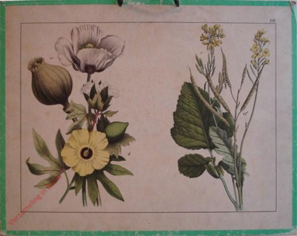 XVI - [Diverse planten]