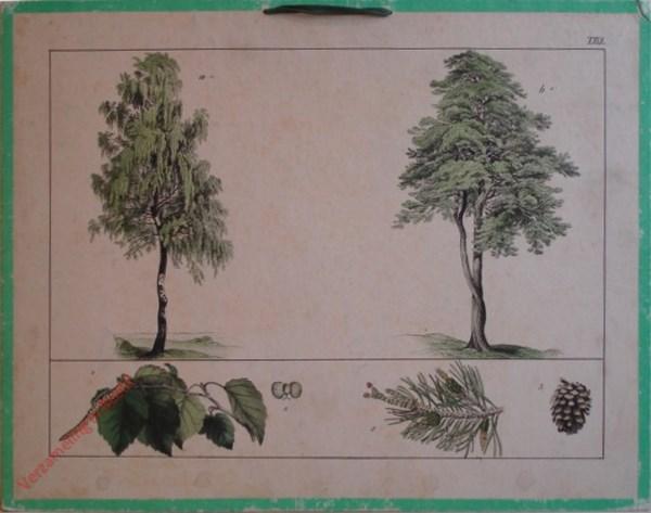XXIX - [Diverse planten]
