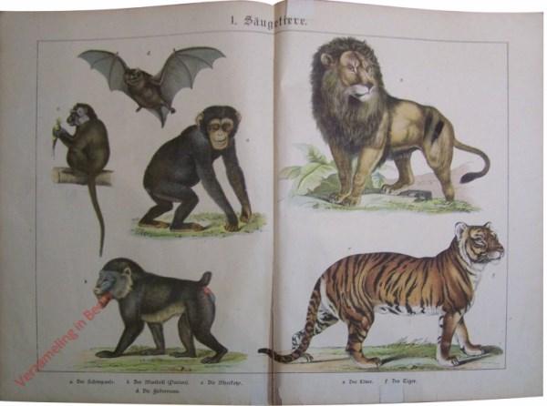 2 -  Säugetiere. [Leeuw, Chimpansee, Vleermuis, Aap, Baviaan, Tijger]