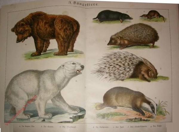 3 -  Säugetiere. [Bruine beer, Ijsbeer, Mol, Spitsmuis, Egel, Stekelvarken, Das]