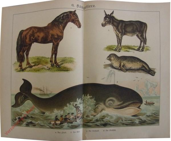 6 -  Säugetiere. [Paard, Ezel, Zeehond, Walvis]