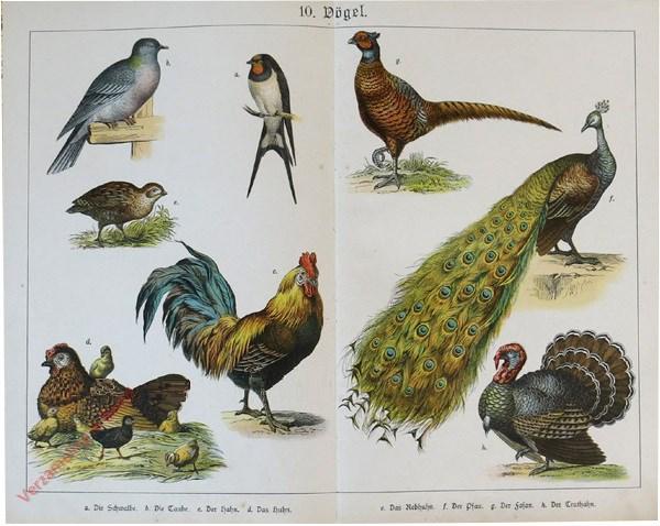 10 - Vögel. [Kip, duif, boerenzwaluw, Fazant, Pauw, Kalkoen]