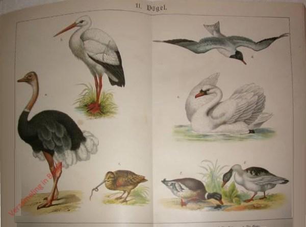 11 - Vögel. [Ooievaar, Struisvogel, Houtsnip, Kokmeeuw, Knobbelzwaan, Wilde eend, Tamme gans]