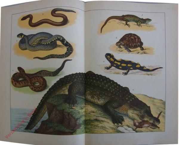 12 - Reptilien und Amfibien. [Gladde slang, Ringslang, Adder, Schildpad, Salamander, Krokodil]