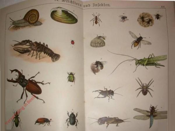 14 - Weichtiere und Insecten. [Vliegend hert, Slak, Torren, etc.]