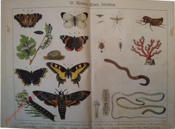 15 - Niedertiere, Insekten. [Atlanta, Koolwitje, Distelvlinder, Koninginnepage, etc., Lintworm]
