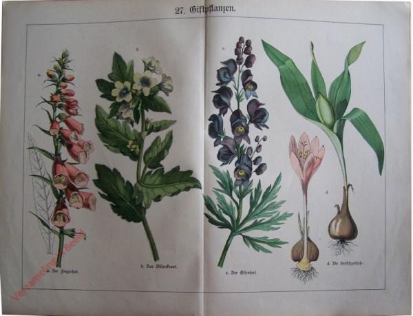 27 -  Giftpflanzen. Der Fingerhut, Das Bilsenkraut, der Eisenhut, Die Herbstzeitlose