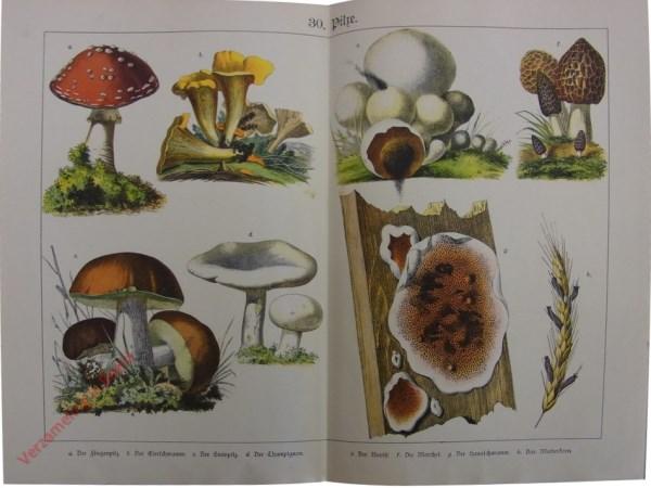 30 - Pilze