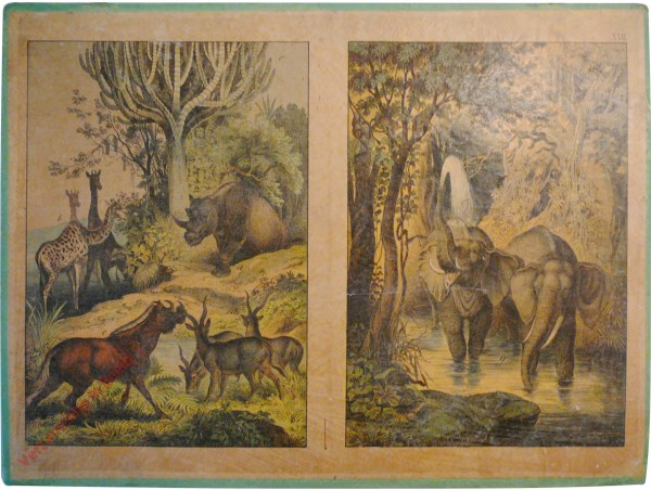 XVII - Afrika