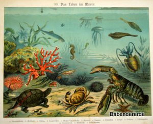 10 - Das Leben im Meere