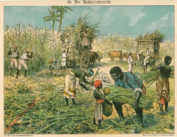 16 - Die Zuckerrohrente