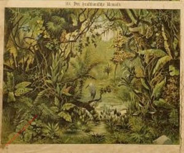 23 - Der brasilianische Urwald
