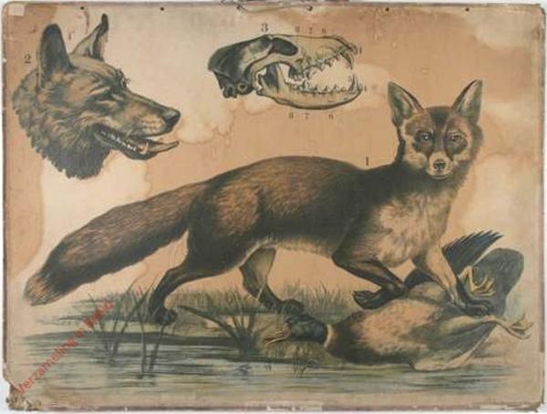 4 [2e druk] - Fuchs, Kopf des Wolfes [Herschilderd]