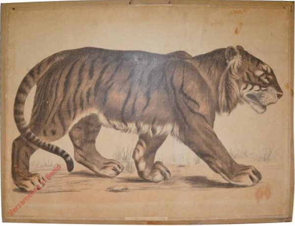 5 [1e druk] - Tiger