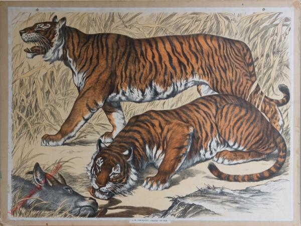 5 [2e druk] - Tiger [Herschilderd]