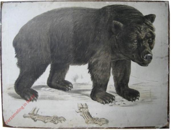 6 [1e druk] - Brauner Bär [Op 4 poten]