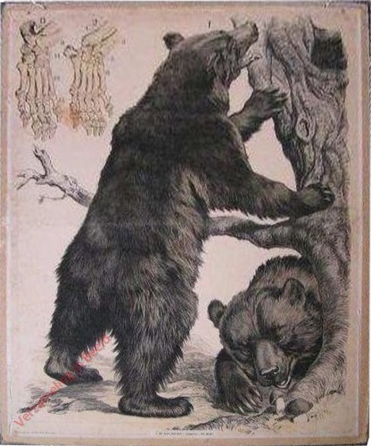 6 [2e druk] - Brauner Bär [Op 2 poten]