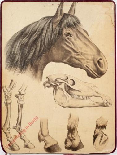 8 [1e druk] - Pferd Jungen
